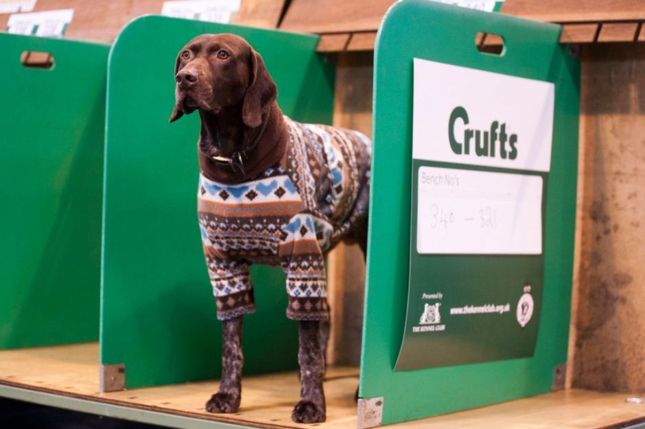 (5) Crufts article new
