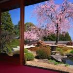 京都の桜 おすすめの穴場撮影スポット|西京区編②|勝持寺・大原野神社・正法寺