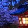 京都の桜 おすすめの穴場撮影スポット|伏見区編|伏見稲荷大社・城南宮・墨染寺