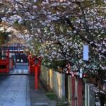 京都の桜 おすすめの穴場撮影スポット 右京区編② 車折神社・梅宮大社・春日神社