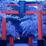 京都 桜の名所|北区編|上賀茂神社・平野神社・原谷苑