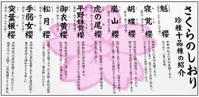 hiranosakura