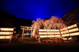oishijinja-sakuralightup-201503
