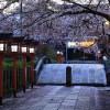 京都の桜 おすすめの穴場撮影スポット|南区編|六孫王神社・吉祥院天満宮