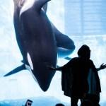 名古屋港水族館の駐車場の安い・近いがわかる周辺おすすめ完全ガイド!