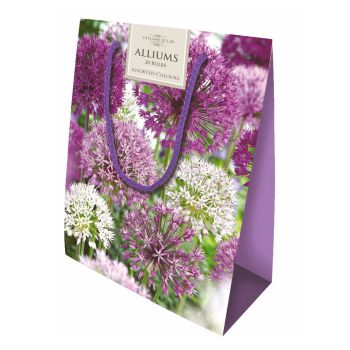 Taylors Bulbs CB34 Allium Gift Bag available from Strawberry Garden Centre, Uttoxeter