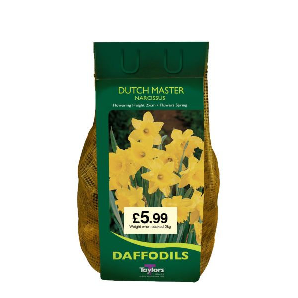 Taylors Bulbs DC61 Narcissus Dutch Master available from Strawberry Garden Centre, Uttoxeter