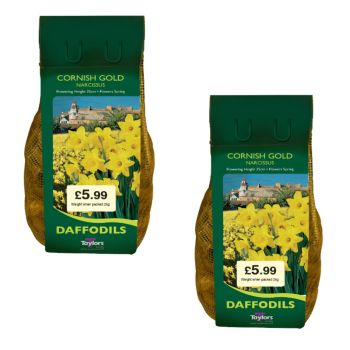 Taylors Bulbs DC77 2 x 2kg Cornish Gold Daffodils available from Strawberry Garden Centre, Uttoxeter