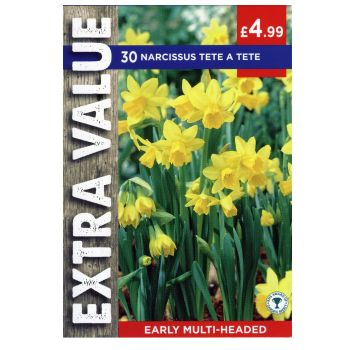 Taylors Bulbs EV103 Narcissus tete a tete available from Strawberry Garden Centre, Uttoxeter