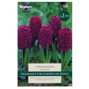 Taylors Bulbs TP637 Hyacinth Woodstock available from Strawberry Garden Centre, Uttoxeter