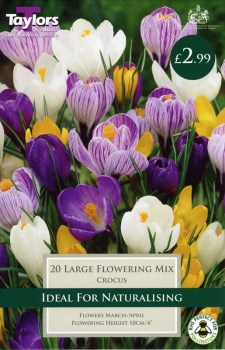 Taylors Bulbs TP655 Mixed Large Flowering Crocus available from Strawberry Garden Centre, Uttoxeter