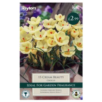 Taylors Bulbs TP661 Crocus Cream Beauty available from Strawberry Garden Centre, Uttoxeter