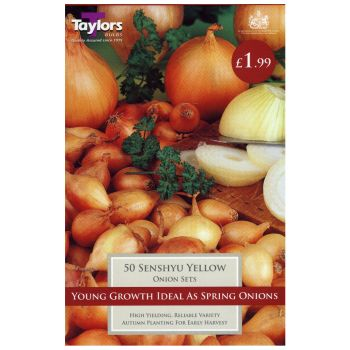 Taylors Bulbs VP100 Onion Set Senshyu Yellow available from Strawberry Garden Centre, Uttoxeter