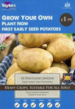 taylors-pentland-javelin-seed-potatoes-available-from-strawberry-garden-centre-uttoxeter