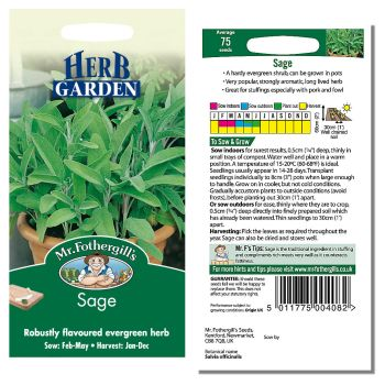 Mr. Fothergill Sage Seeds available from Strawberry Garden Centre, Uttoxeter