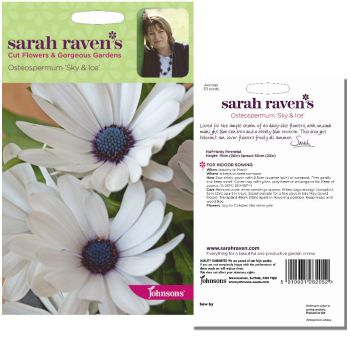 sarah-raven-osteospermum-sky-ice-seeds-available-from-strawberry-garden-centre-uttoxeter