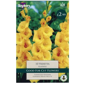 Taylors Bulbs TS154 gladioli vedetta available from Strawberry Garden Centre, Uttoxeter