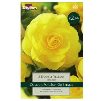 Taylors Bulbs TS209 Begonia Double yellow bulbs available from Strawberry Garden Centre, Uttoxeter