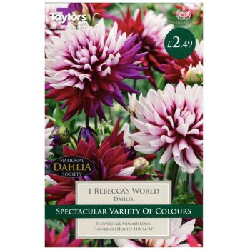 Taylors Bulbs TS477 dahlia rebeccas world bulbs available from Strawberry Garden Centre, Uttoxeter