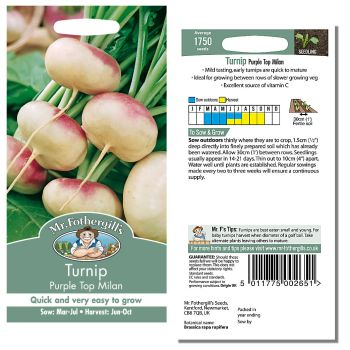 Mr. Fothergill Turnip Purple Top Milan Seeds available from Strawberry Garden Centre, Uttoxeter