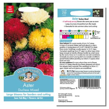 Mr. Fothergill Aster Duchess Mixed Seeds available from Strawberry Garden Centre, Uttoxeter