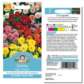 Mr. Fothergill Dahlia Figaro Mixed Seeds available from Strawberry Garden Centre, Uttoxeter