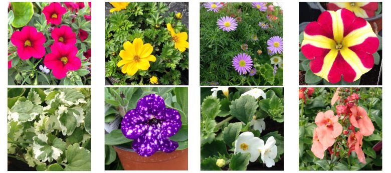 tub & hanging basket plant offer available from Strawberry Garden Centre, Uttoxeter