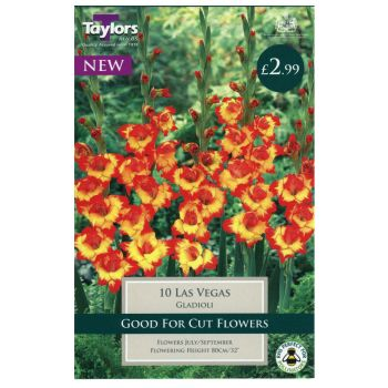 Taylors Bulbs TS167 gladioli las vegas bulbs available from Strawberry Garden Centre, Uttoxeter