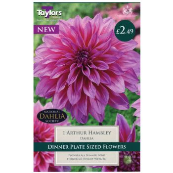 Taylors Bulbs TS459 dahlia arthur hambley available from Strawberry Garden Centre, Uttoxeter