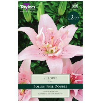 Taylors Bulbs TS589 lily elodie bulbs available from Strawberry Garden Centre, Uttoxeter