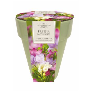 Taylors Bulbs SH30 indoor freesia planter available from Strawberry Garden Centre, Uttoxeter