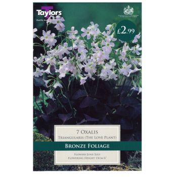 Taylors Bulbs TS777 oxalis triangularis available from Strawberry Garden Centre, Uttoxeter