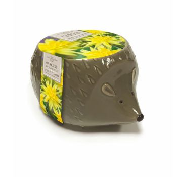 Taylors Bulbs AH98 Novelty Hedgehog Planter available from Strawberry Garden Centre, Uttoxeter