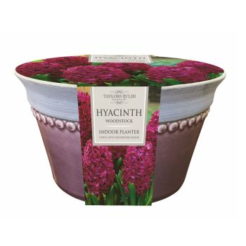 Taylors Bulbs AP54 Indoor Hyacinth Bowl available from Strawberry Garden Centre, Uttoxeter