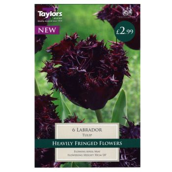 Taylors Bulbs TP503 Tulip Labrador available from Strawberry Garden Centre, Uttoxeter