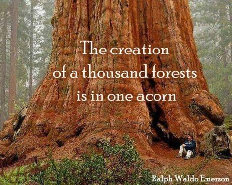 quote tree acorn creation nature