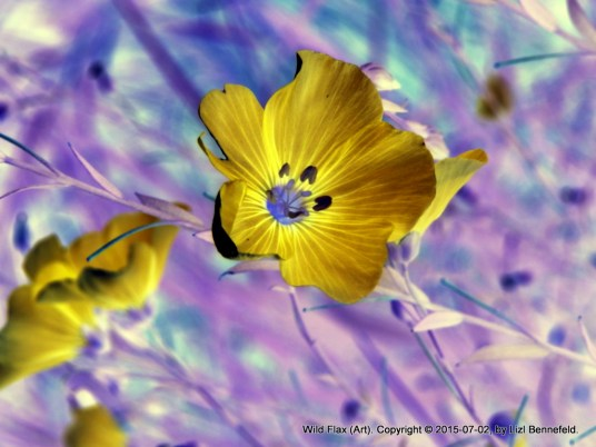 Wild Flax (Art)