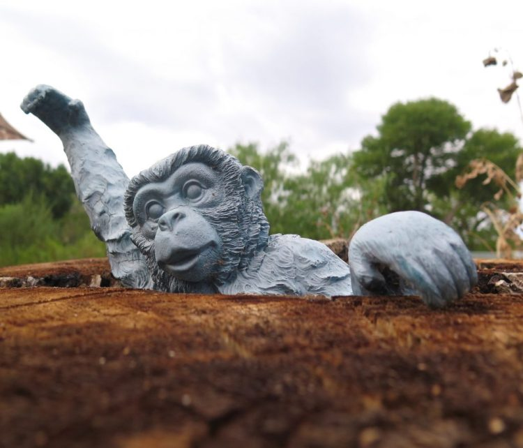No living monkeys live on the preserve.
