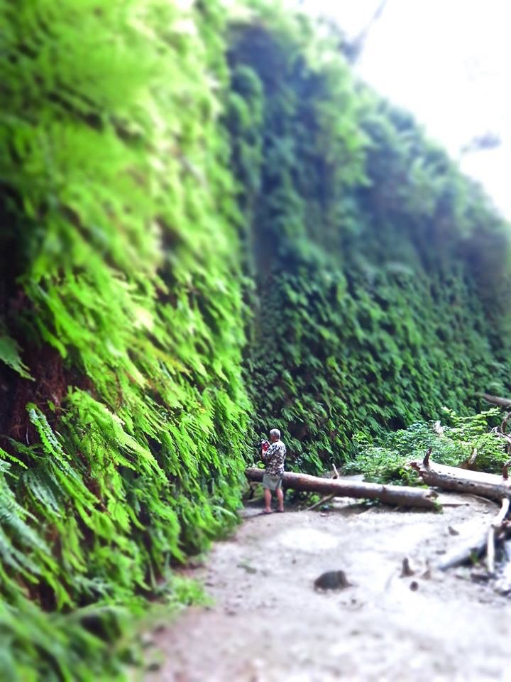 The Great Fern Wall