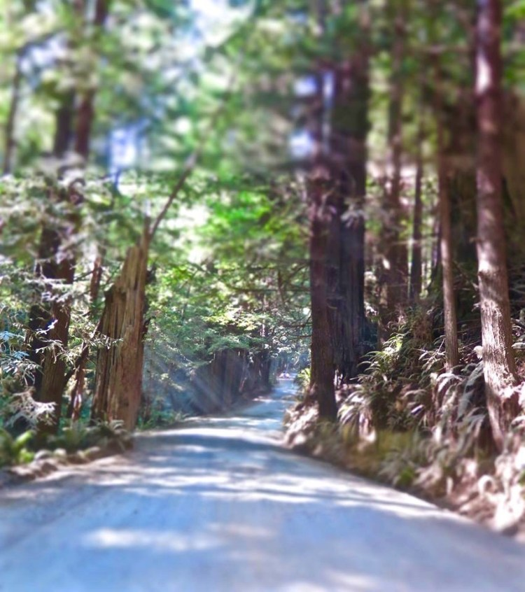 One of the best parts about visiting Fern Canyon is the road on the way there once you exit the 101.