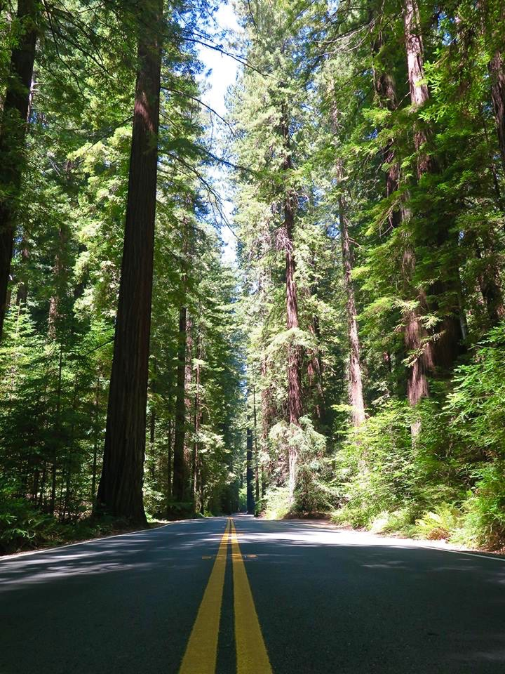 This 31-mile portion of historic Highway 101, which runs parallel to the modern Highway 101 and is accessible by most vehicles, is surrounded by Humboldt Redwoods State Park, which has the largest remaining stand of virgin redwoods in the world.