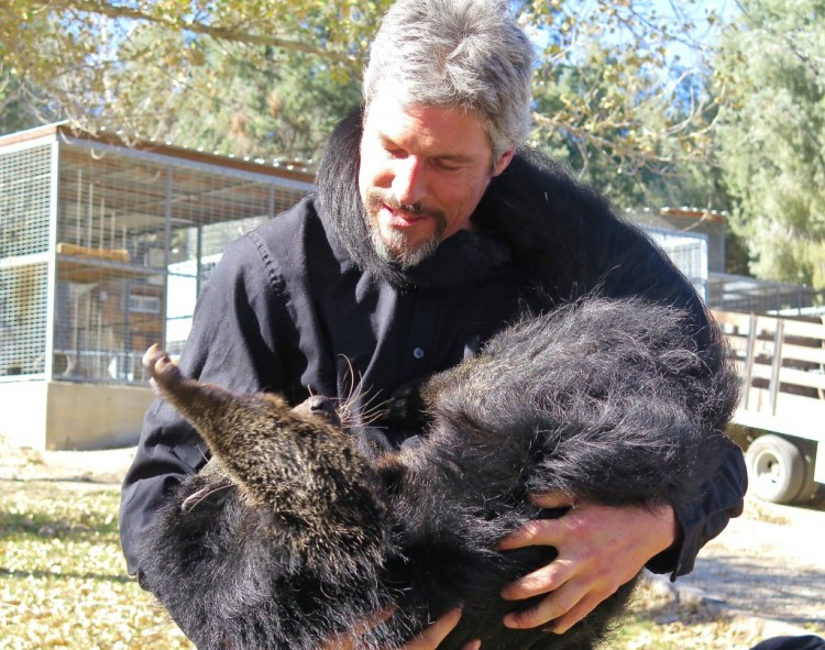 ...and there was no better evidence of that than when he brought out Ninja, the Southeast Asian Binturong which is also known as a bearcat.