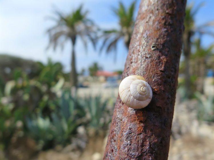 Rusty & Invasive