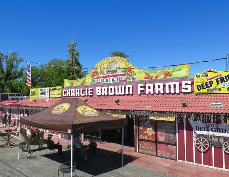 ...but all that traveling on a hot fall day kind of required a little refueling, so we stopped at Charlie Brown Farms.