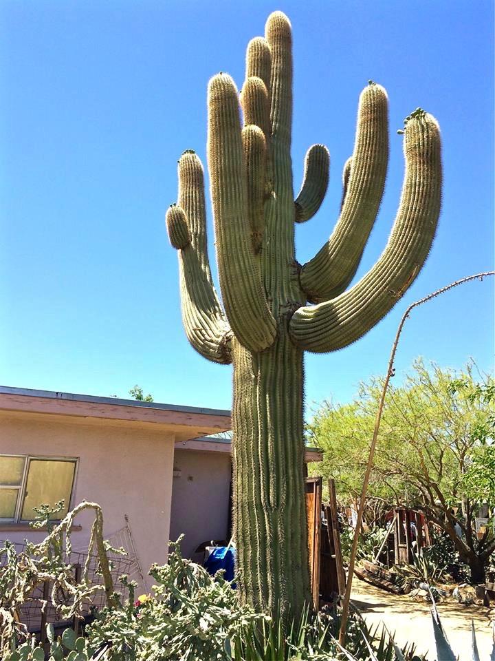 Saguaro High