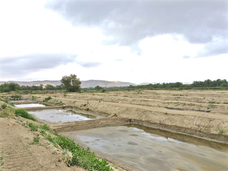 A network of levees, weirs, and conveyance piping control water flow through the ponds where it undergoes sedimentation, assimilation, adsorption, and denitrification treatment processes, all of which are specifically designed to remove nitrogen and other pollutants from tertiary-treated wastewater in the Santa Ana River.