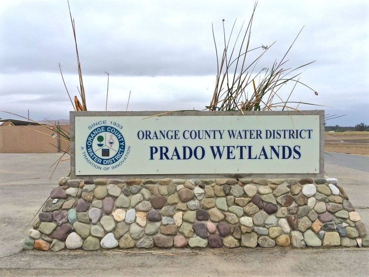 The OCWD owns 2,150 acres behind Prado Dam, including nearly 465 acres of the largest constructed wetlands in Southern California. In addition to providing an ideal habitat for birds, the wetlands effectively reduce nitrogen levels in Santa Ana River water.