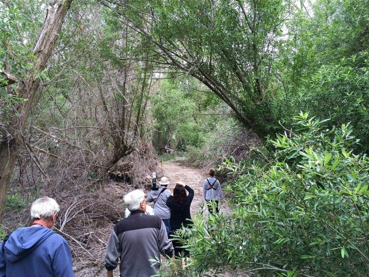 Meandering waterways lined with trees and vegetation are becoming scarce. The state has lost an estimated 90 percent of these areas, known as riparian corridors,