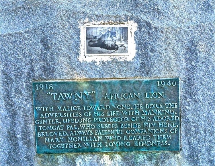 Tawny adored his tomcat pal who would travel along with Tawny on his movie shoots. Tragically they both died together in a fire in 1940 at the sanctuary where they lived.