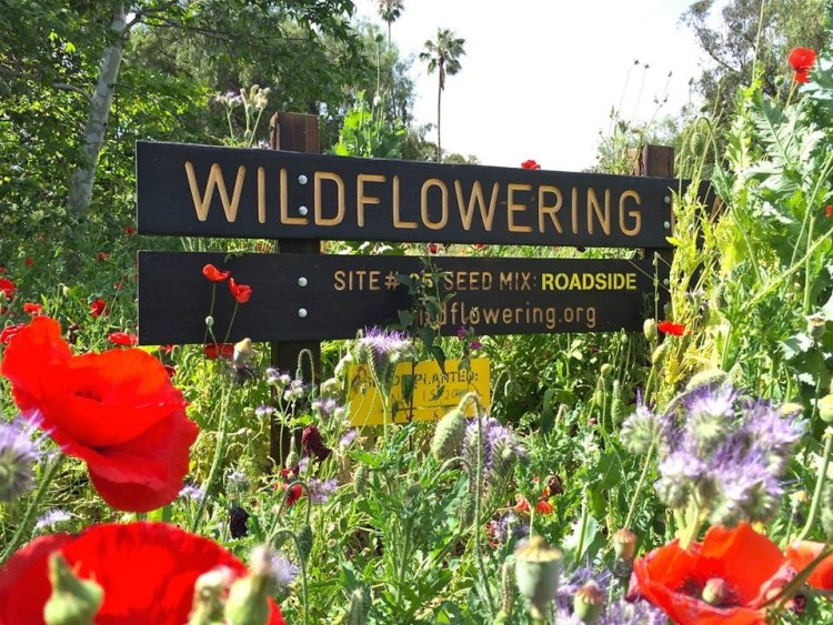 I stumbled upon the garden while searching for this sign, site #25 in the Wildflowering LA project.